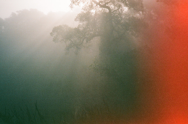 How to Take Good Photos in Bad Weathers with Film Cameras (15)