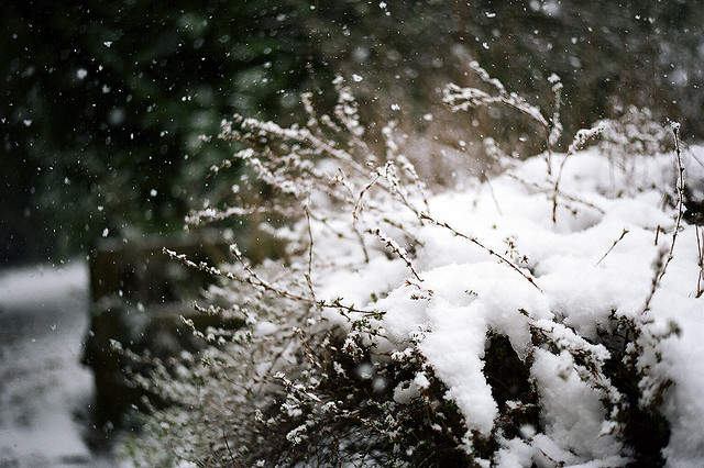 How to Take Good Photos in Bad Weathers with Film Cameras (3)